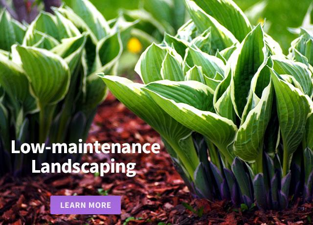 Low-maintenance Landscaping